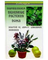 Картинка к книге Дмитриевич Виктор Казьмин - Выращиваем целебные растения дома: Золотой ус, лимон, цикламен, эхинацея