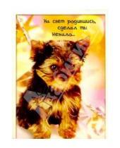 Картинка к книге Сфера - З-060/День рождения/открытка двойная